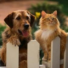 Mettre votre animal de compagnie en pension